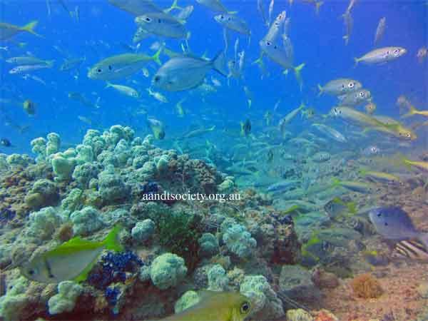 schooling-fish-4-.jpg