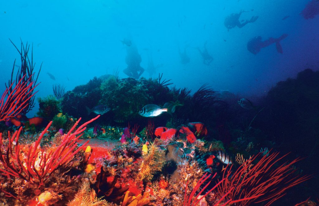 Scuba-Diving-Port-Elizabeth 2.jpg