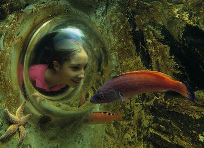 SeaLifeAquarium11.jpg
