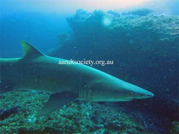 shark-7-.jpg