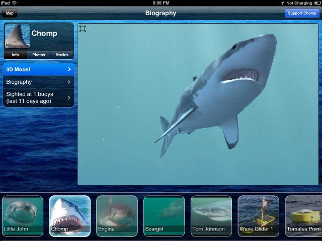 Shark-app.jpg