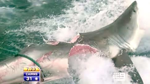 shark-fights-shark.jpg