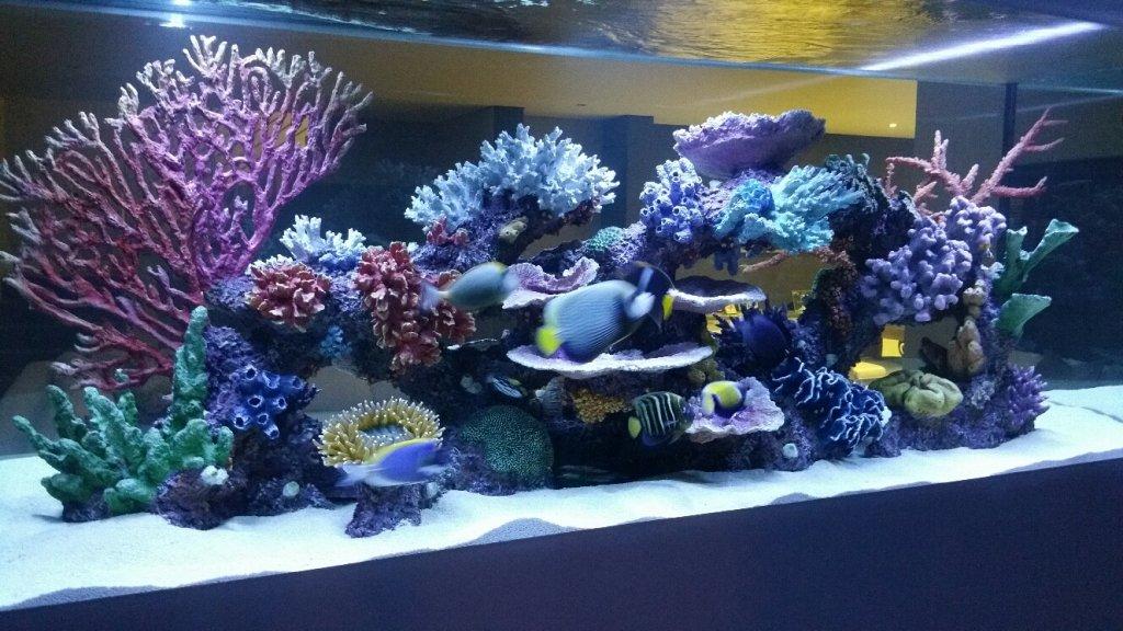 My 5000 Litre Dream Aquarium Page 4 Marine Aquariums