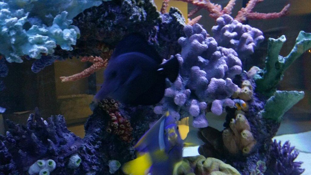 Show Aquarium 15.jpg