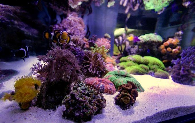 siam-reef-2.jpg