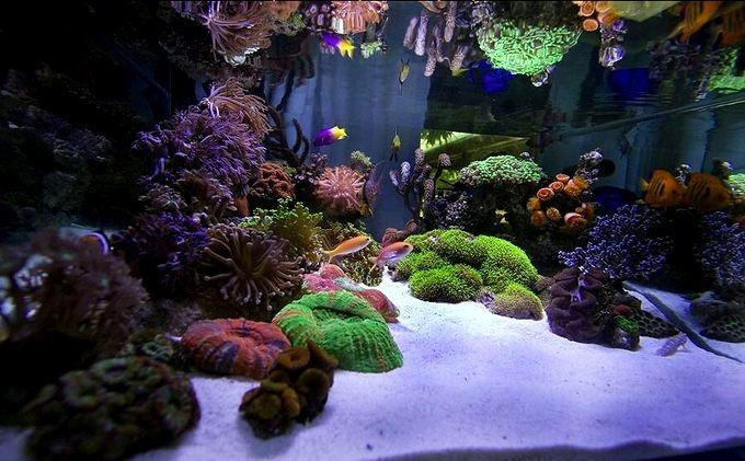 siam-reef.jpg