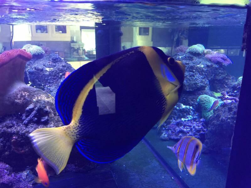 skribbled angel fish.jpg