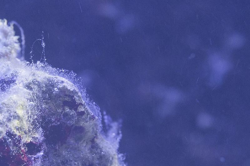 Slime 02.jpg