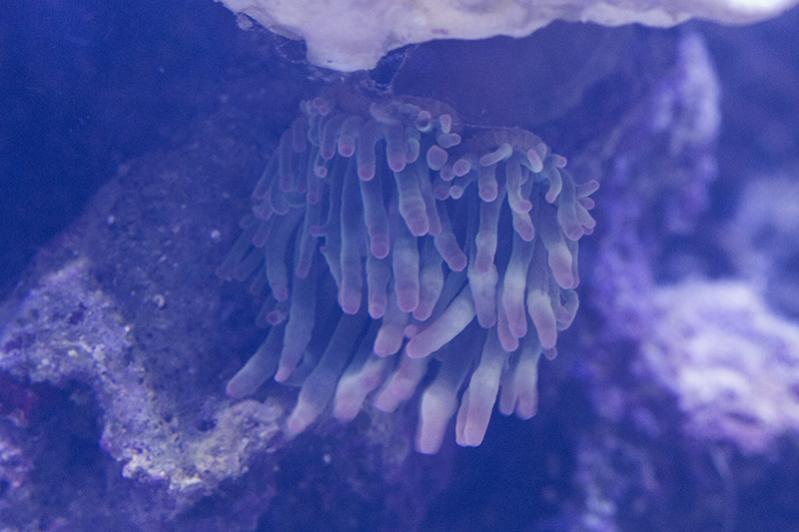 Slime 03.jpg