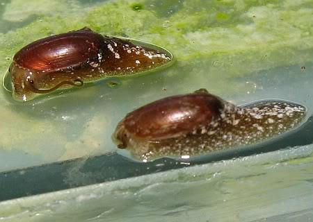 slug3.jpg