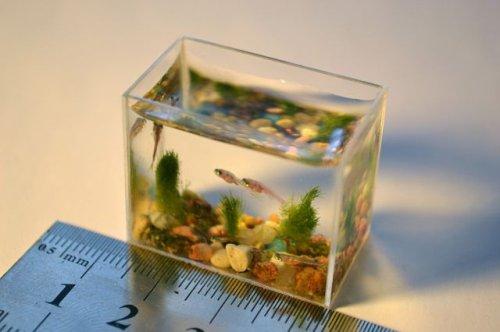 smallest-aquarium-1.jpg
