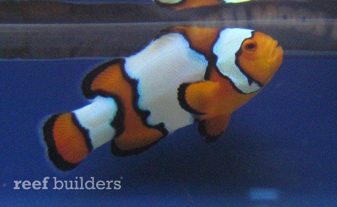 splash-rare-fish-11.jpg