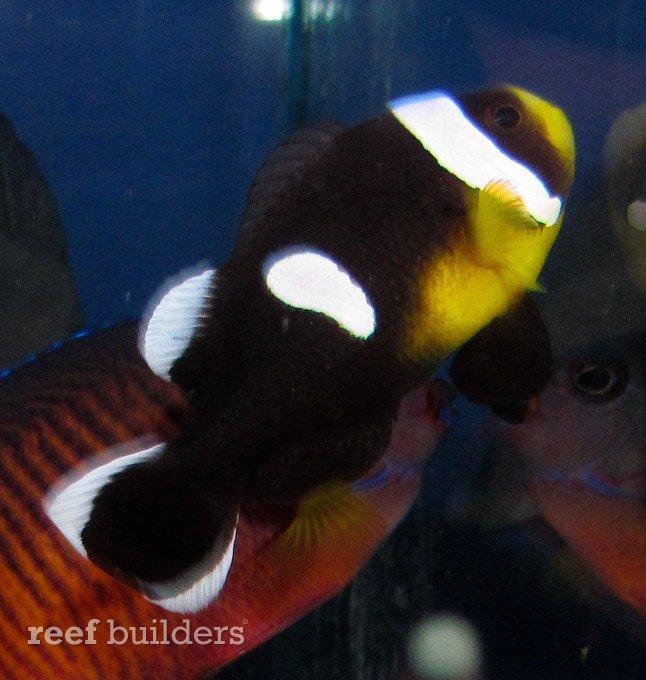 splash-rare-fish-12-2.jpg