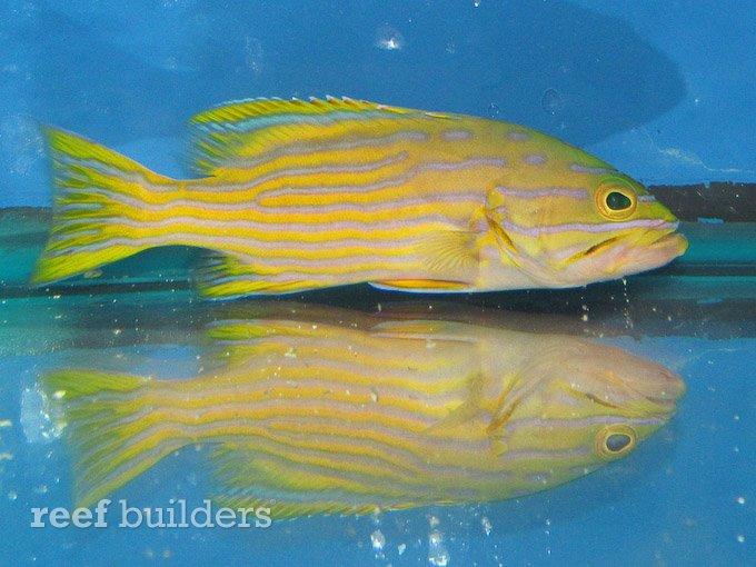 splash-rare-fish-12.jpg