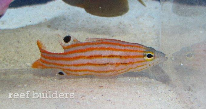 splash-rare-fish-14.jpg