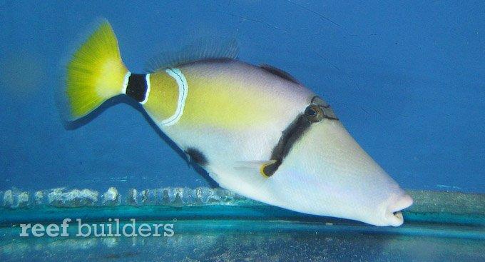 splash-rare-fish-3.jpg
