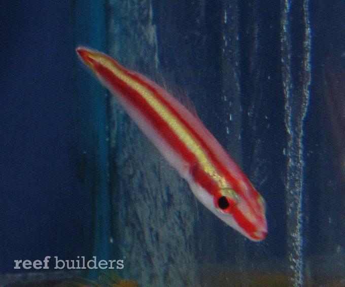 splash-rare-fish-4.jpg