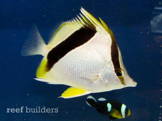 splash-rare-fish-6.jpg