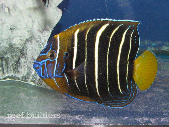 splash-rare-fish-7.jpg