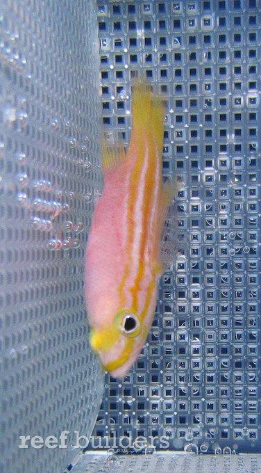 splash-rare-fish-9.jpg