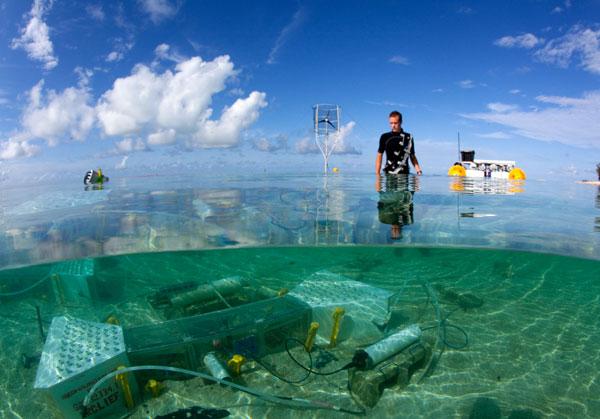 stanford-coral-reef-laboratory.jpg