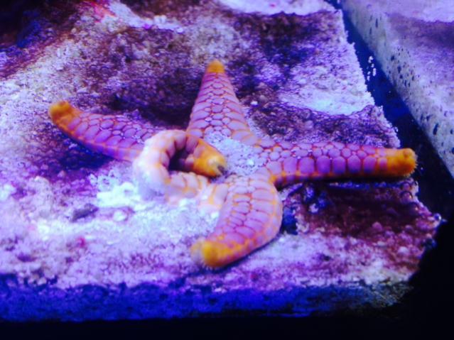 Starfish 01.jpg