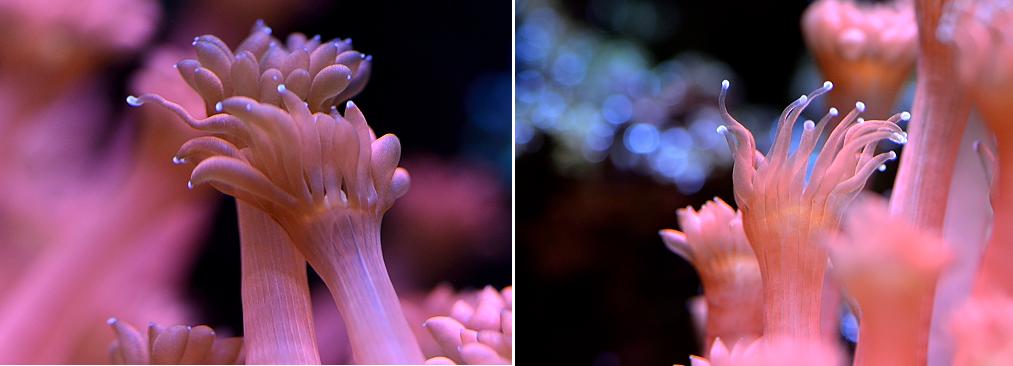 Stinging-tentacles.png