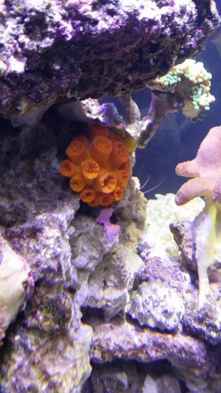 sun coral R300.jpg