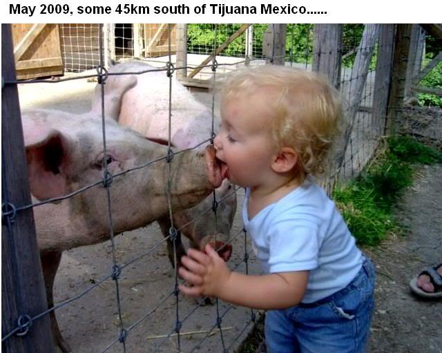 swineflu.jpg