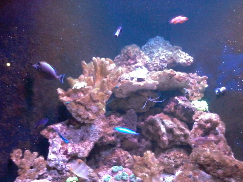 tank image 4.jpg