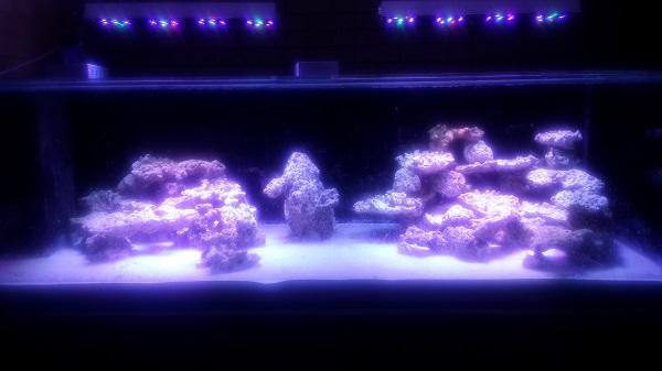 Tank with Lights and Rocks.jpg