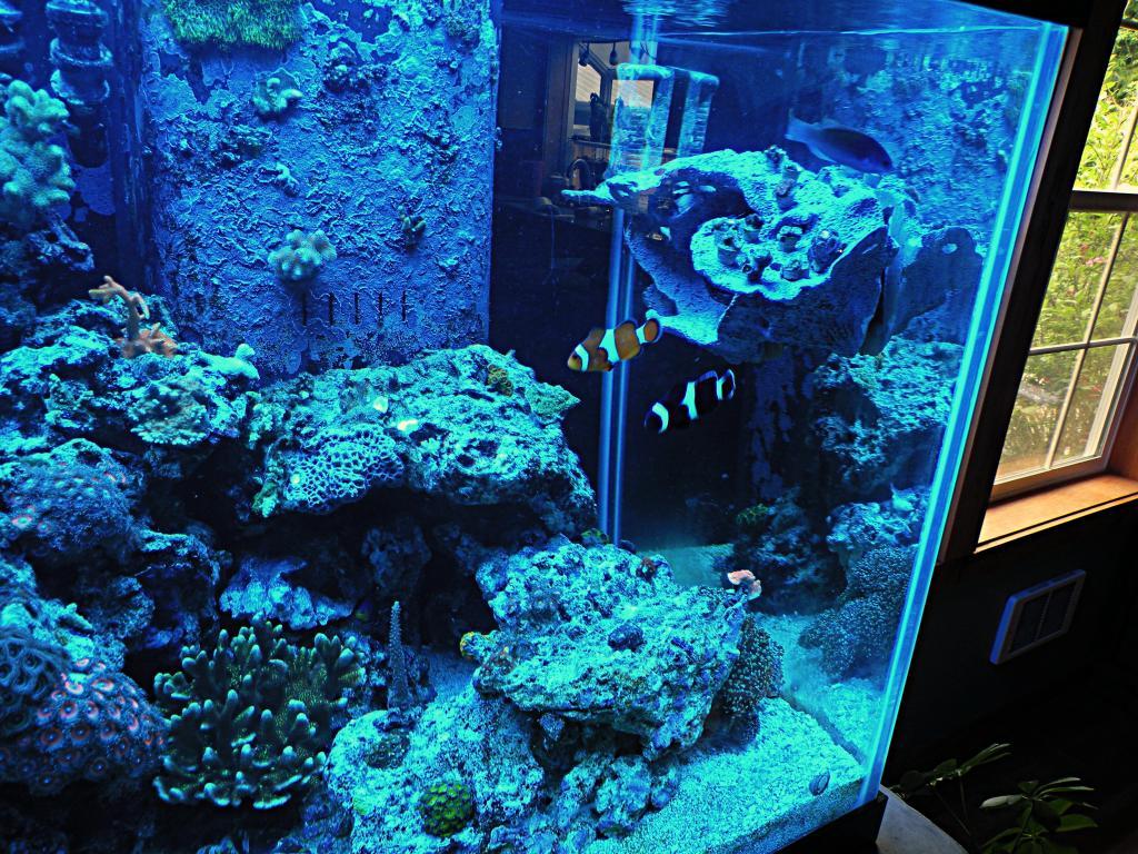 The-Alternative-Reef-Powerstation-2.jpg