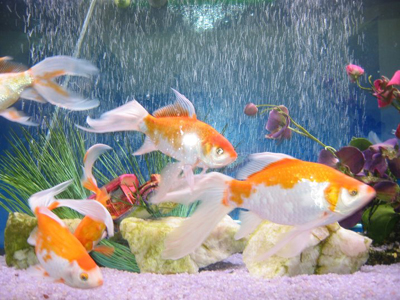 the-complete-guide-to-aquariums2.jpg