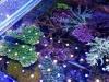 thumbs_160620121229.jpg
