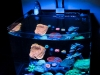 thumbs_aivega-led-aquarium.jpg