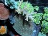 thumbs_aivega-led-coral-6.jpg