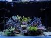 thumbs_dakkang-reef.jpg
