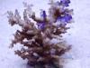 thumbs_icefireechi-720.jpg
