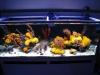 thumbs_mariusz-sun-coral-reef-1.jpg