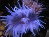 thumbs_mariusz-sun-coral-reef-4.jpg