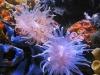 thumbs_mariusz-sun-coral-reef-5.jpg