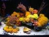 thumbs_mariusz-sun-coral-reef-6.jpg