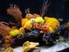 thumbs_mariusz-sun-coral-reef-8.jpg