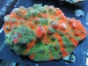 thumbs_meltdown-chalice-coral-1.jpg