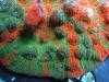 thumbs_meltdown-chalice-coral-2.jpg