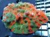 thumbs_meltdown-chalice-coral-4.jpg