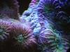 thumbs_mesoscope-coral-macros-2.jpg