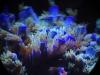 thumbs_mesoscope-coral-macros-4.jpg