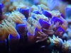 thumbs_mesoscope-coral-macros-5.jpg