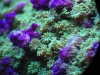 thumbs_mesoscope-coral-macros-7.jpg